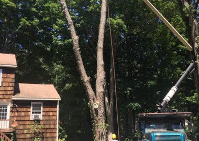 Paulo's Landscaping and Tree Removal
