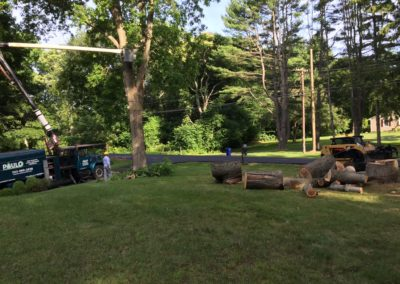 Paulo Landscaping and Tree Removal, LLC