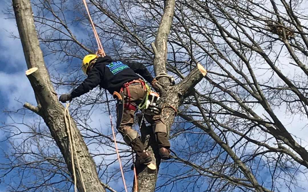 New Haven – Affordable Tree Removal Tree Pruning Tree Service