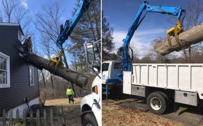 New Haven, CT – Large Tree Removal & Stump Grinding Services