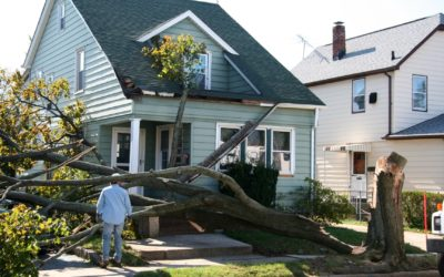 New Haven, Orange, CT – Emergency Tree Removal Services