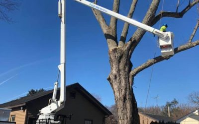 Woodbridge, CT Tree Removal and Tree Cutting – Best Tree Removal in Woodbridge