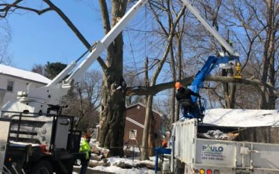 West Haven, CT | Tree Removal | Tree Cutting & Pruning | Stump Grinding