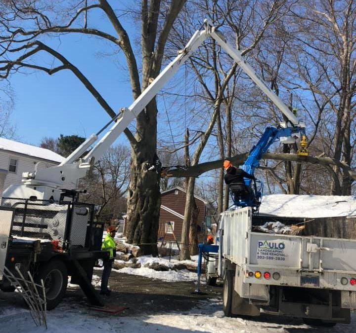 Shelton, CT – Tree Removal Company | Tree Trimming or Cutting Service in Shelton