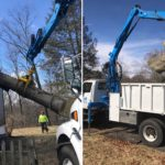 Fairfield, CT Tree Removal Company