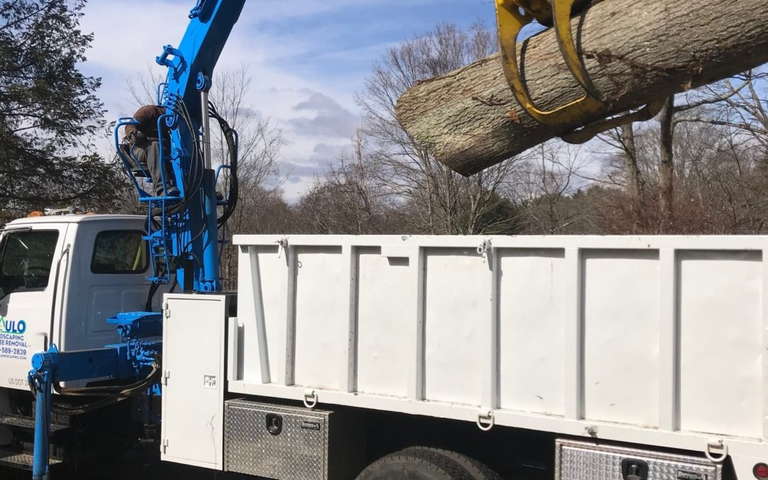 Best Tree Service in Fairfield, CT | Tree Removal | Tree Cutting | Stump Removal in Fairfield, CT
