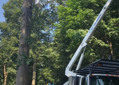 Emergency Tree Removal in Woodbridge, CT
