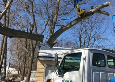 Tree Removal Project in Bridgeport, CT